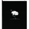 Pioneer 4 x 6 In. Fabric Frame Bi-Directional Photo Album (300 Photos)-Black