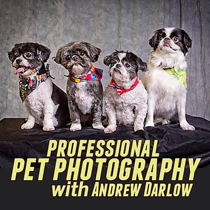Live Pet Photography Photo Shoot and Lightroom Workflow with Andrew Darlow