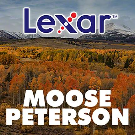 Wanderings of a Wildlife Photographer with Moose Peterson and LEXAR