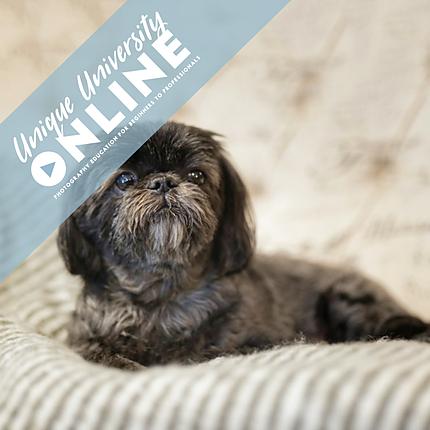 UUOnline (Free): Intro to Pet Photography with Brandon Cortez